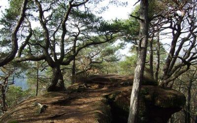 Unterwegs im Dahner Felsenland