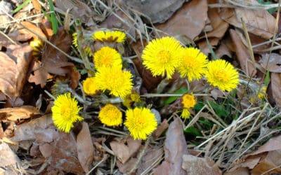 Februar: Die Natur erwacht zu neuem Leben