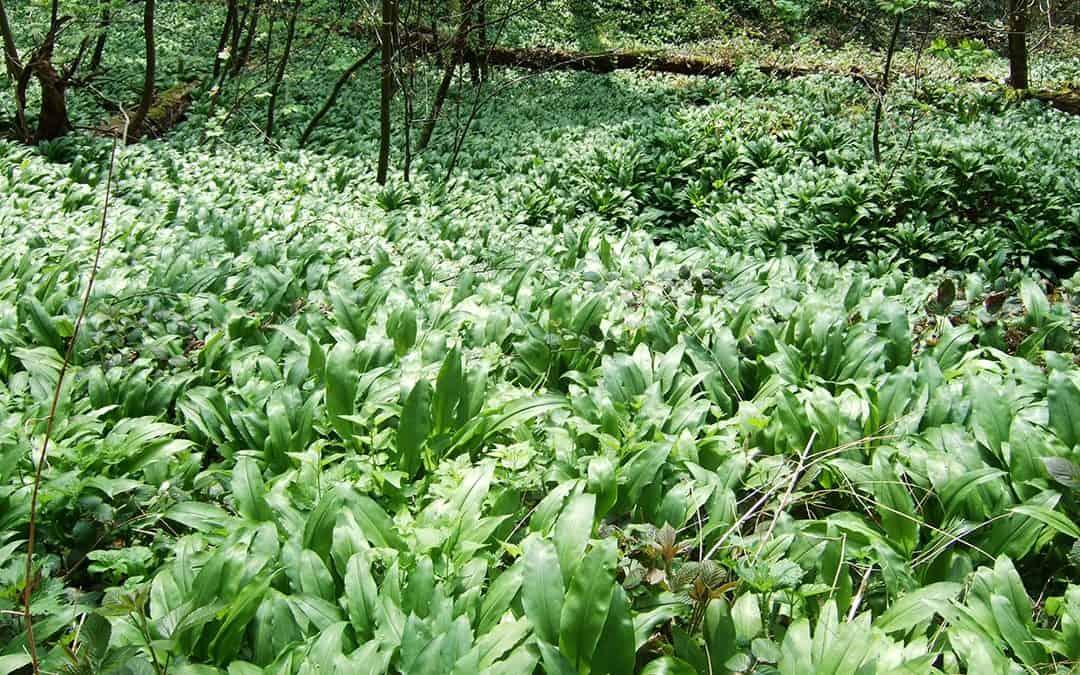 Mit natürlichen Mitteln die Frühjahrsmüdigkeit vertreiben