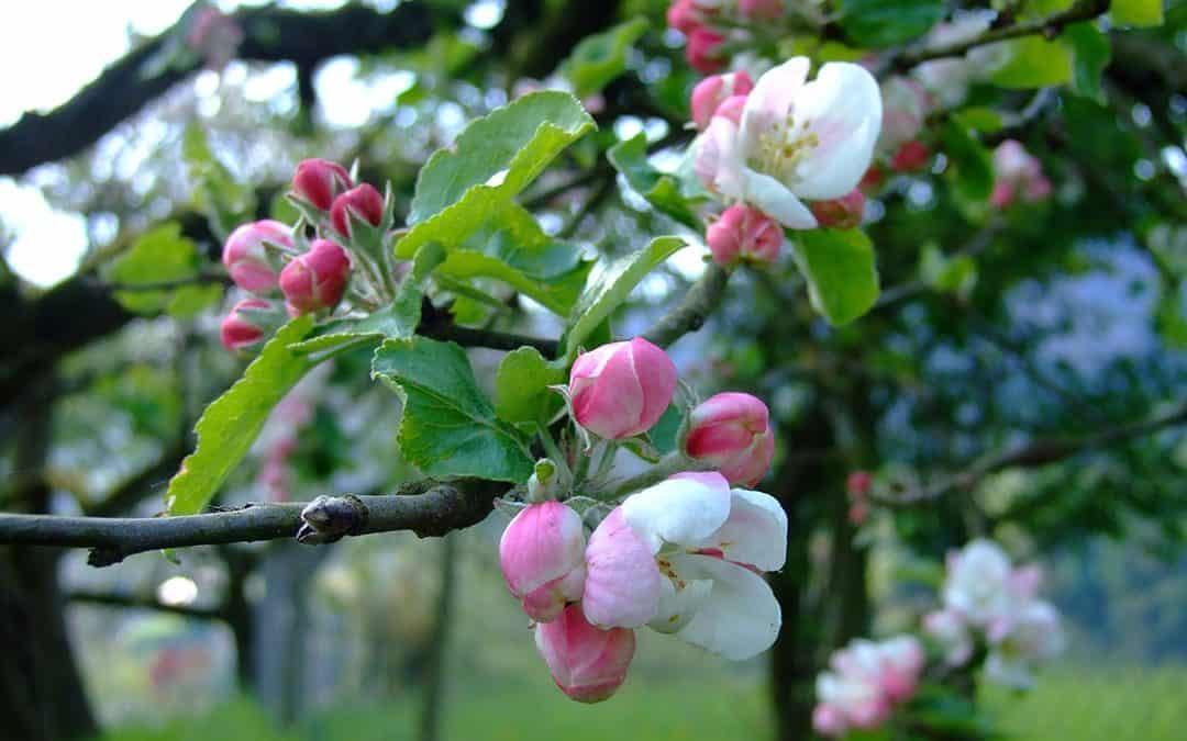 Im April die Natur genießen