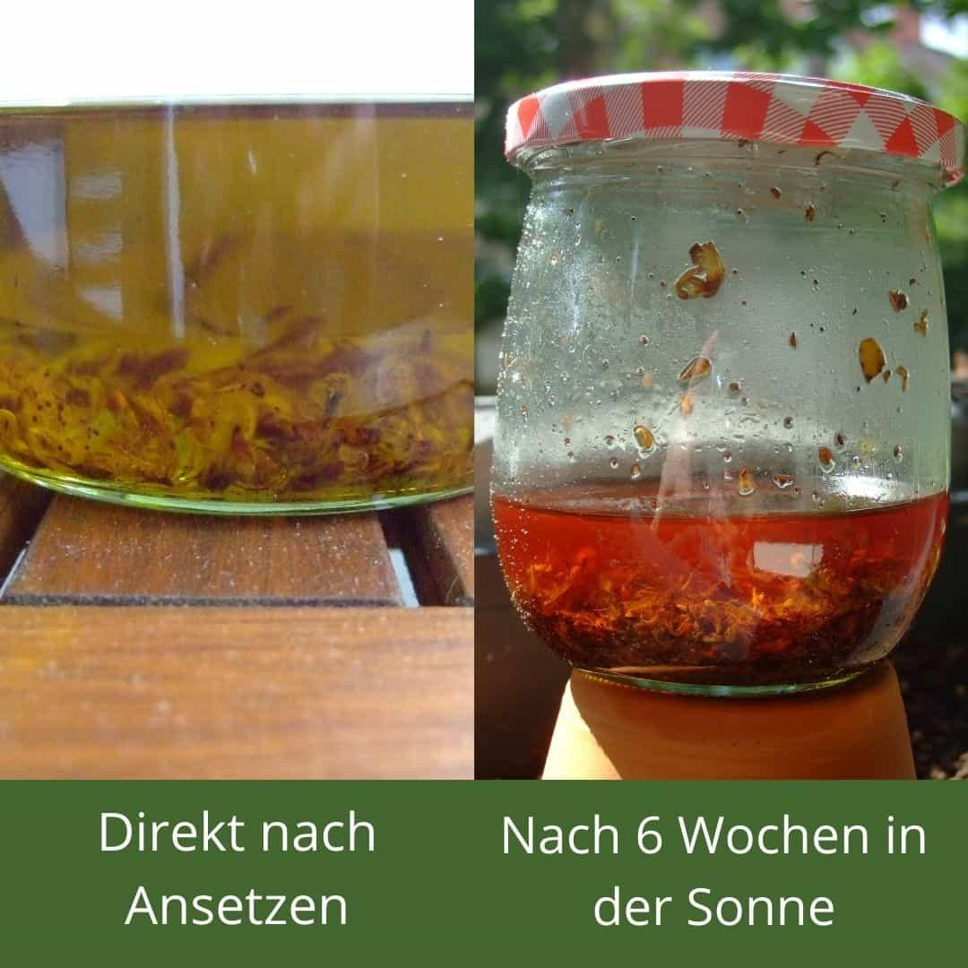 Johanniskraut - Rotöl in verschiedenen Stadien